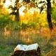 Elke zaterdag geeft Schrijven Online je een gedicht van de week.