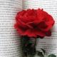 Ook voor dichters: Schrijven Magazine